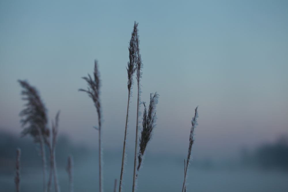 IMG_9883_Fotor